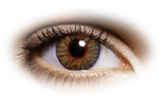 Freshlook Colorblends Pure Hazel Contact Lenses Optyk Rozmus